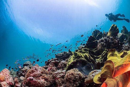 CoralReefImageBank_Pacific_TraceyJenning