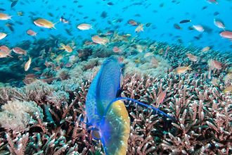 Animals and the Reef.jpg