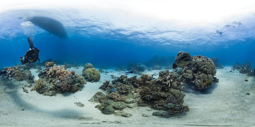 australia_coral reef.jpg