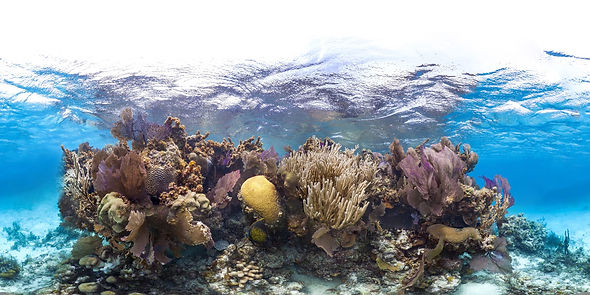 Natural Reef Structure.jpg