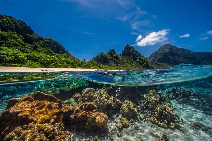 pristine coral reef.jpg