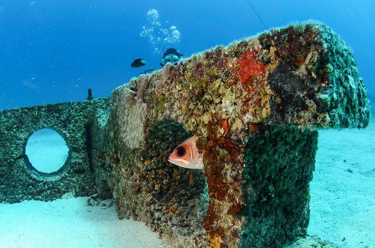 Fish on IntelliReefs C 2020 Benthic Cove