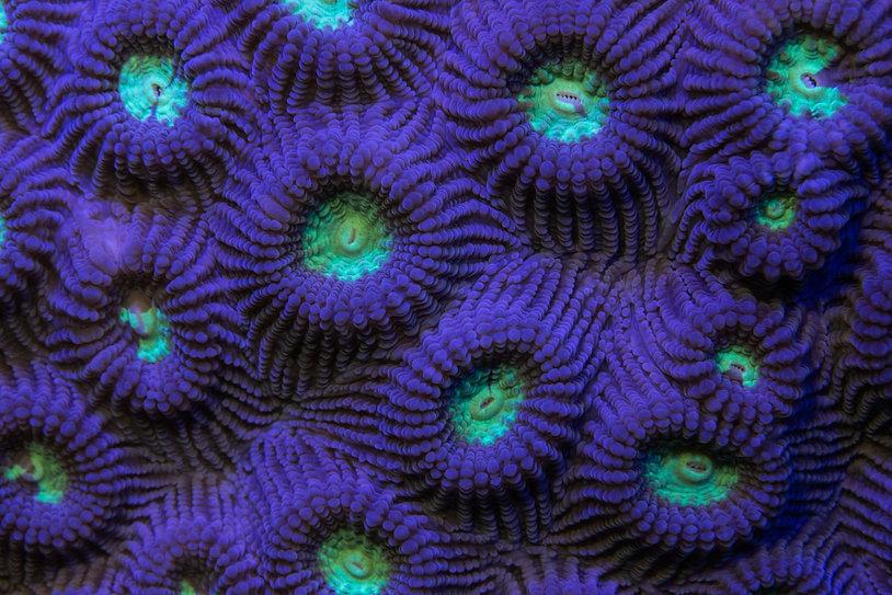 Coral Closeup.jpg