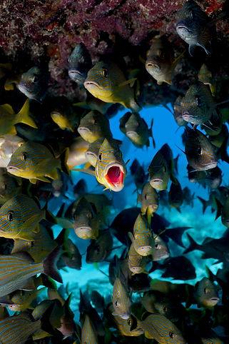 Sea_Creature_Fish.jpg