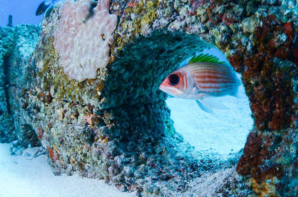 Oceanite_IanKellett-4.jpg