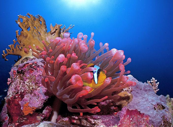 Coral Reef Habitat.jpg