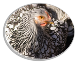 chicken 3 painting.png