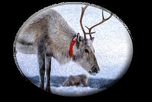 Reindeer P F O.png