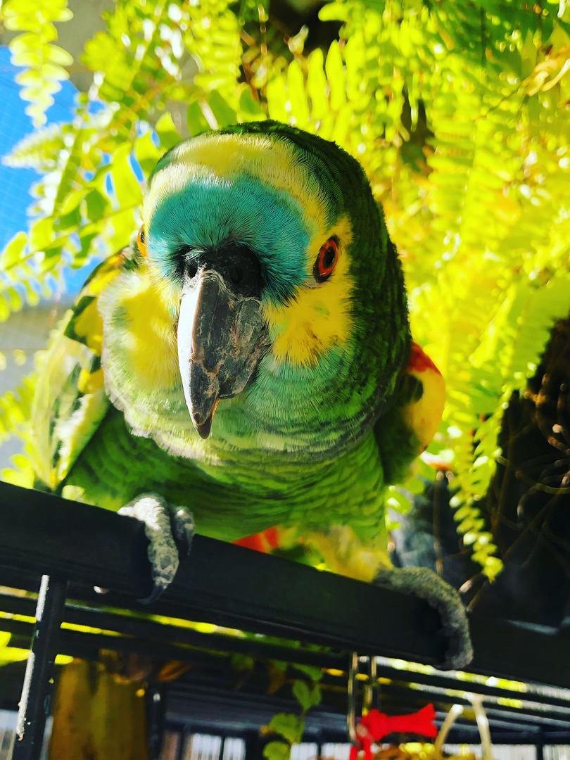 Aviary_tango.JPG