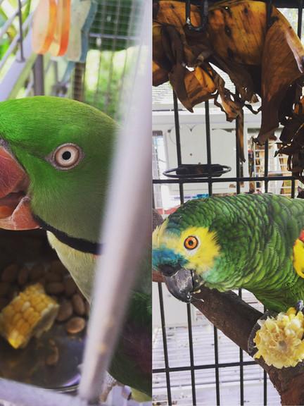 AviaryWasabi&Tango.JPG