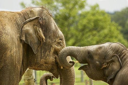 baby-elephant-5126326_1280.jpg