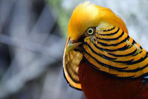 bird-4389152_1280.jpg
