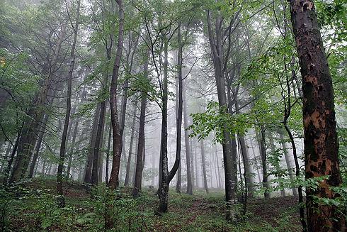 forest-2815352_1920.jpg