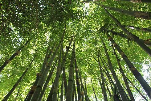 bamboo-566450_1280.jpg