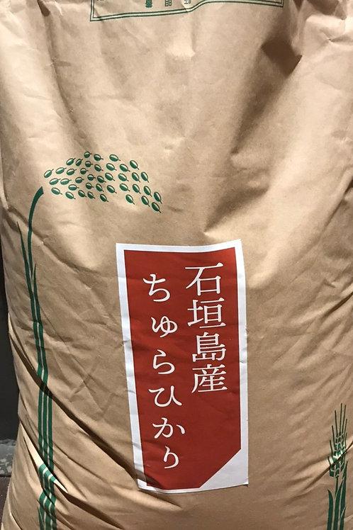 日本一早い新米!沖縄県石垣産ちゅらひかり