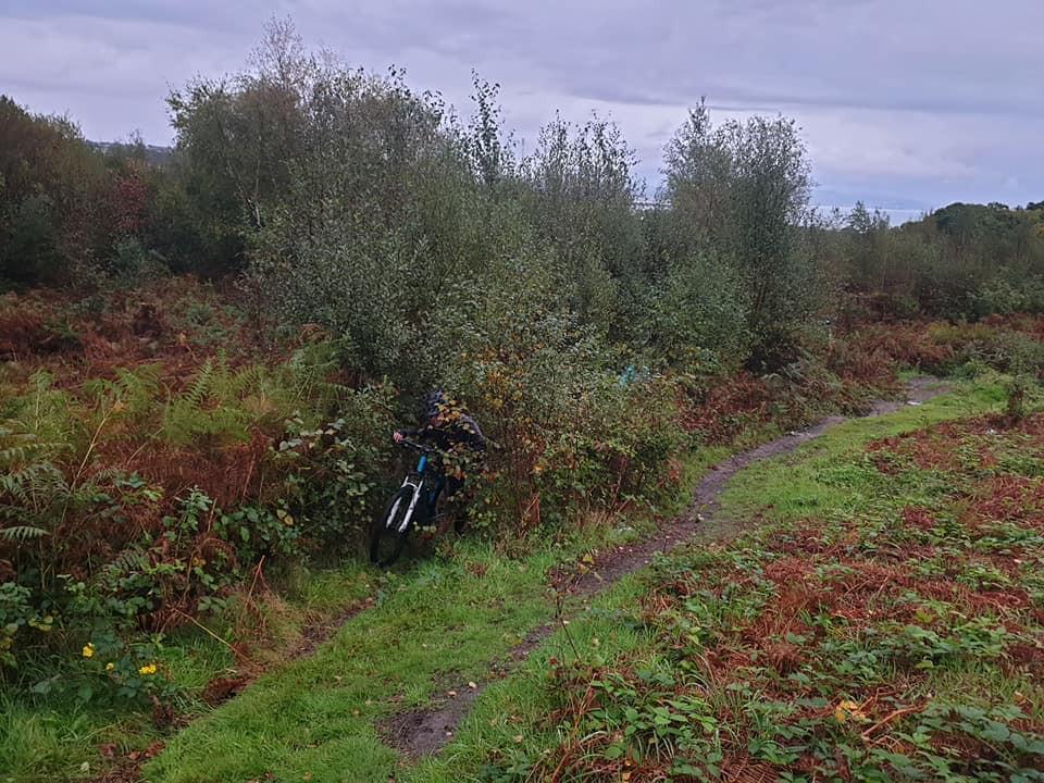 Mountain biking in Clyne Woods, Swansea biker emerges from the woodland