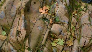 fall-scaled.jpg