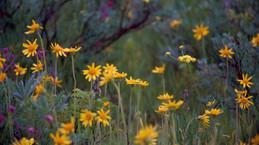 meadow-1-scaled.jpg