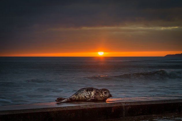 A Seal. Wildlife on the Spa