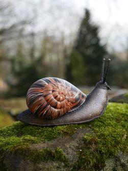 Giant Garden Snail