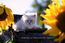 IMG_3302а