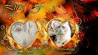 fall-wallpapers-27853-2926821.jpg
