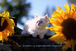 IMG_3209а