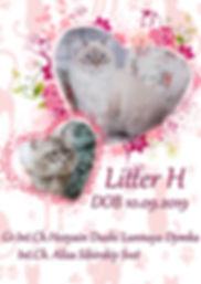 H litter.jpg