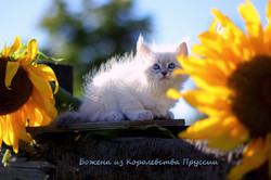IMG_3194а