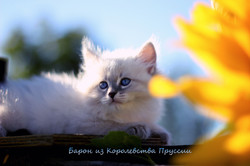 IMG_3253а