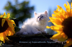 IMG_3197а