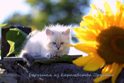 IMG_3169а