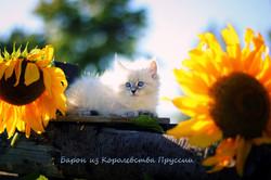 IMG_3231а