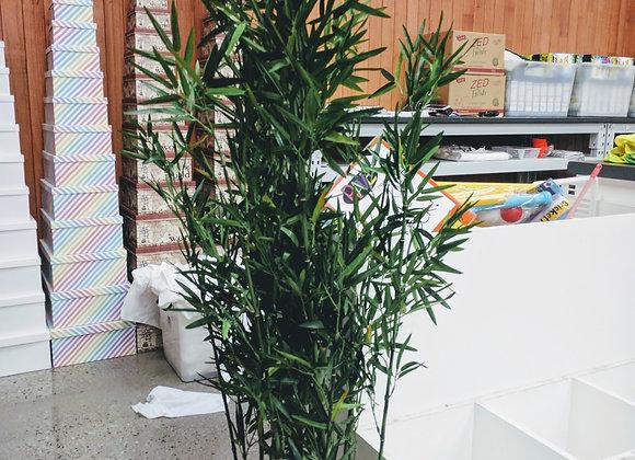 Bamboo in pot 152cm