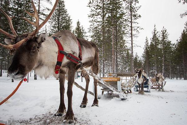 Lapônia Finlândia