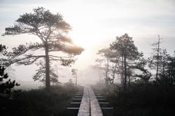 Kakerdaja bog, Estonia