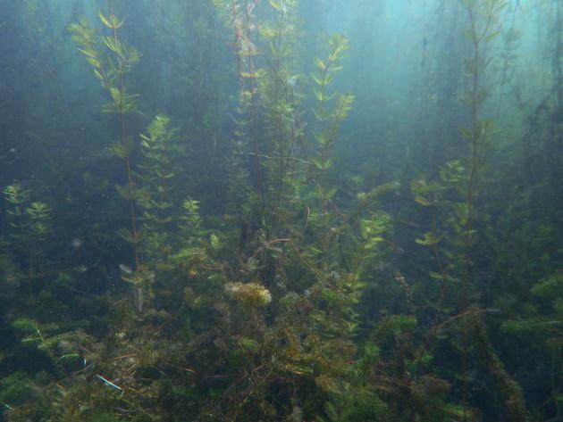 Bénélux sous-marin (bientôt)