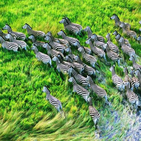 As bolhas de conformidade social e como elas influenciam você