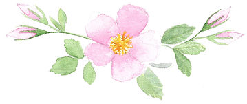 Watercolour Wild Rose by Brittany Perry
