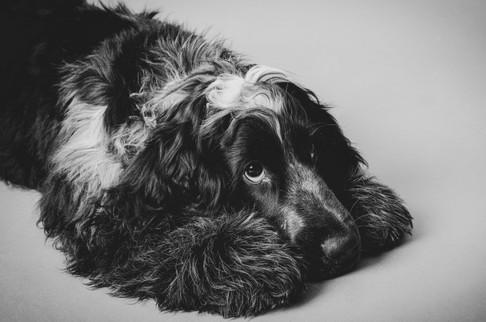 Hund im Studio