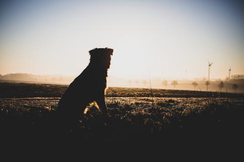 Hund im Sonnenaufgang