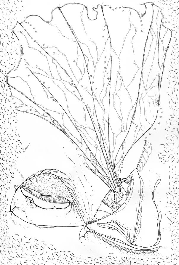 Superorganism #116