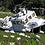 Thumbnail: Beached Among The Daisies 8999