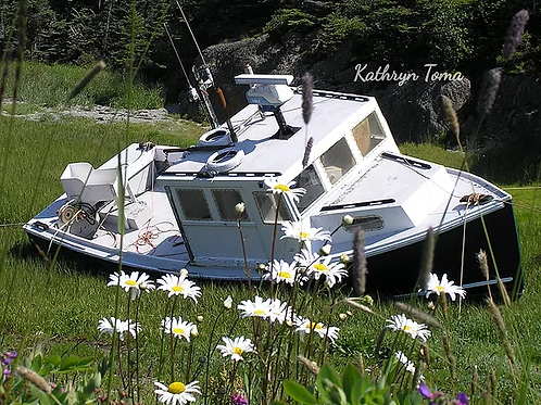 Beached Among The Daisies 8999