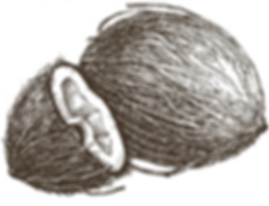 cocot.PNG