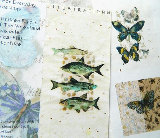 Freshwater Fish & British Butterflies