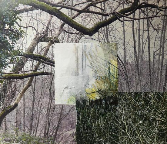 Winter: Bare Branches