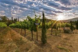 Troon-Vineyard