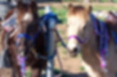 pony rides and petting zoos