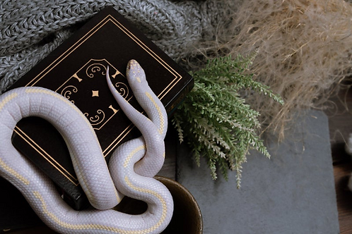 Awesome! Extraordinary Books on Witchcraft 10 Books